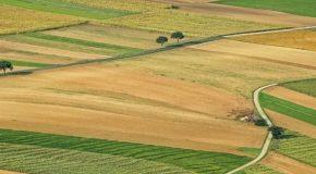 Affichage environnemental  : L'Ecoscore risque de promouvoir l'agriculture intensive