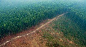 Zéro déforestation – Encore du chemin à parcourir