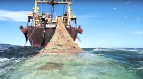 Ressources marines – La pêche française doit encore s'améliorer
