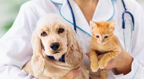 Vétérinaires – Les différences de tarifs entre régions se creusent